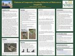 Patterns of Cooperative Feeding Behavior of Midwestern Songbirds